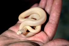 Synet af en slange eller tanken om et indelukket rum. Med de rette værktøjer kan man blive sin fobi kvit. Nøglen er tid og tålmodighed.