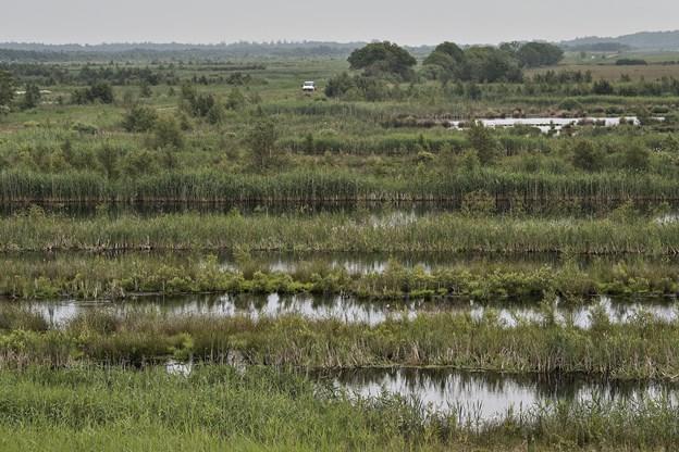 Lille Vildmose: Giganterstatning til mosebrug