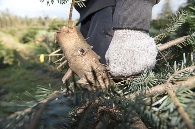 Byttede bil til juletræer