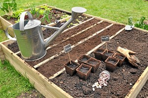 Der skal plantes, vandes og luges i foråret. Det er nu grundstenene lægges til resten af sæsonen i haven, så sørg for at komme godt fra start.