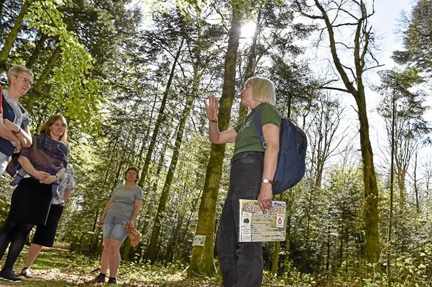 Skovridder Ditte Svendsen tog gæster med ind i skoven lige ved bålpladsen. Her kunne hun fortælle om et spændende område: Overklitfoged Jens Bohn-Jespersens 701 felter på hver 20 x 20 meter, som stadig kan ses i skoven den dag i dag. Foto: Ole Iversen