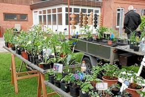 Frem med haveplanterne