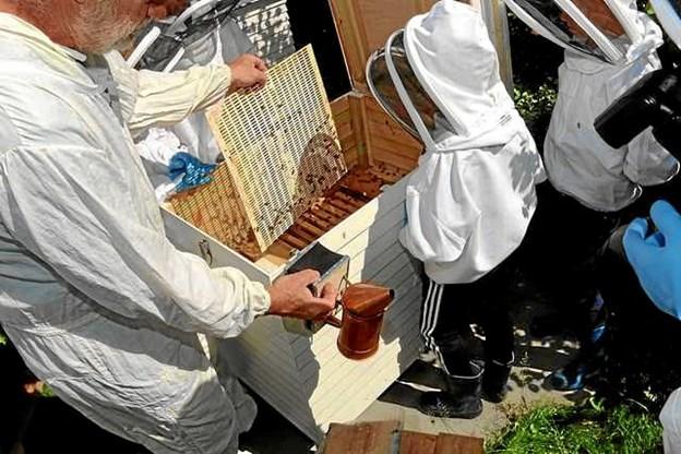 Biavlerparret holder meget af at lære børn at omgås bier på en respektfuld måde. Arkivfoto