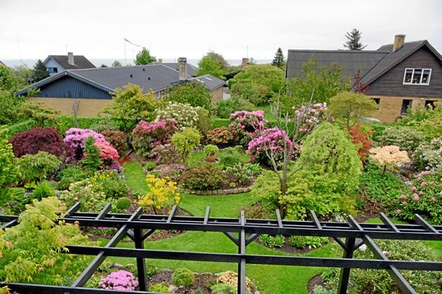 Haven i Haldbjerg