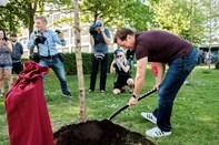 Kildeparken: Legende planter træ