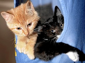 Pinsehygge på kattehjemmet