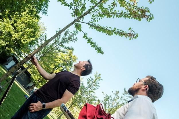 Sådan. Træet står flot. Foto: Lasse Sand