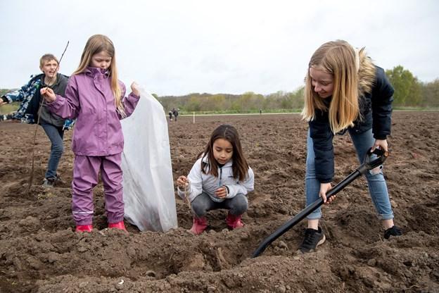 Heldigvis var markens jord grubbet inden plantedagen, så specielt de mindre elever var i stand til at grave grave huller til planterne med de lånte spader