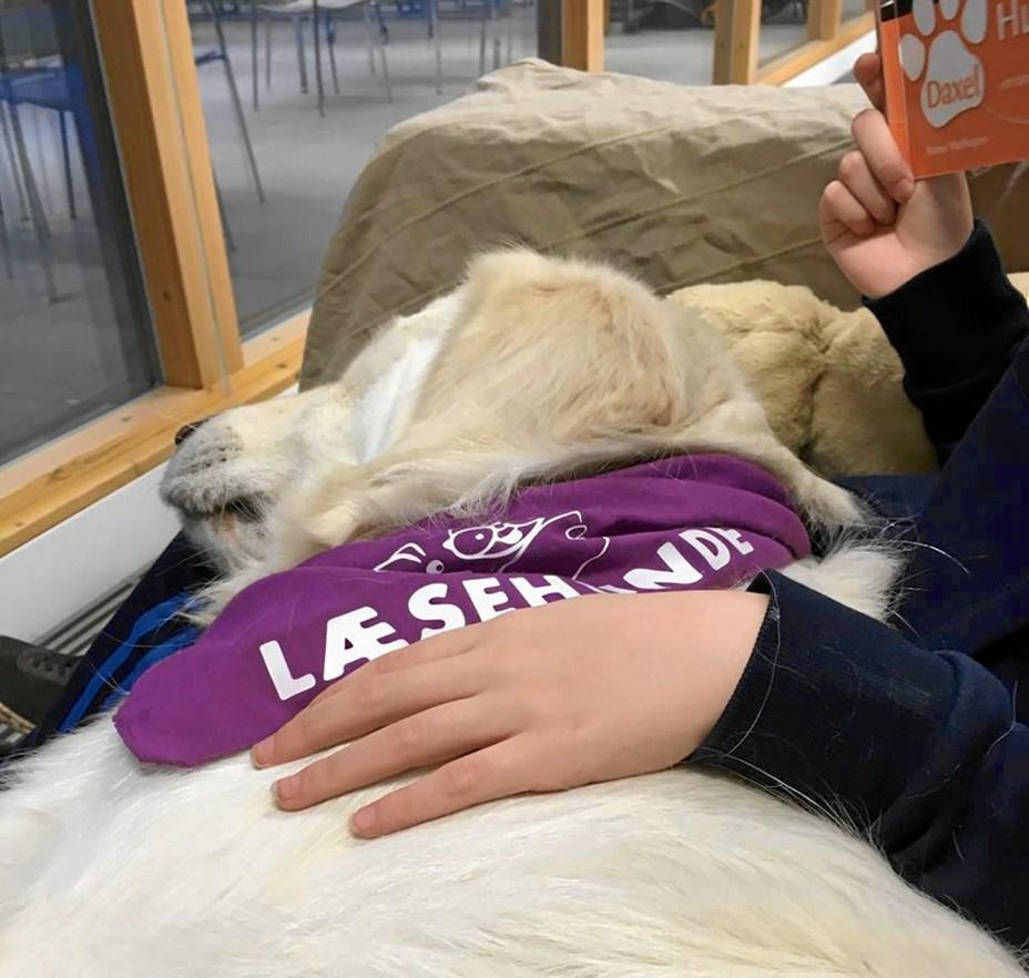 Få en pelset hjælpelærer: Du kan møde læsehunde i Aalborg Zoo
