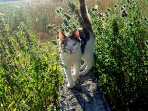 Styr på de vilde katte: Nu kommer kattene ikke til at sidde for længe i fælden