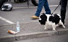 Det kan påvirke helbredet og madvanerne, når du giver din hund eller kat en rest fra aftensmaden