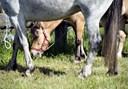 Nu er det sikkert: Der kommer heste til Hjallerup Marked