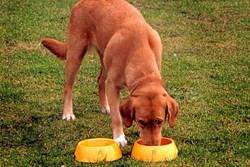 Råt foder til hunde og katte har i stigende grad vundet indpas i madskålen, men du risikerer, at kæledyret ikke får den rette ernæring.