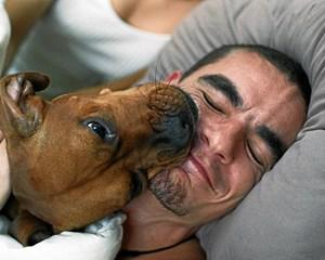 For lidt motion og for dårlig kost. Det er hverdagen for mange af landets kæledyr. Ansvaret hviler først og fremmest på ejerne.
