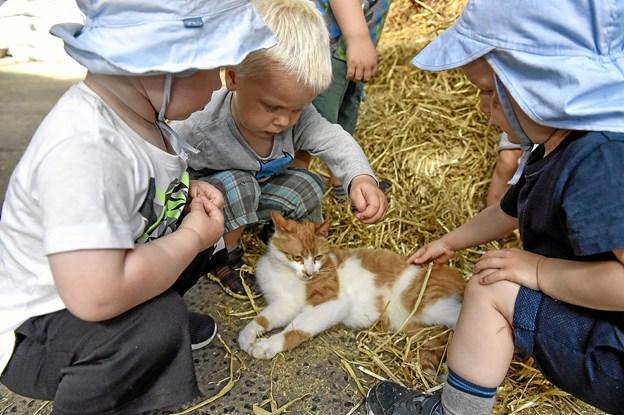 Katten var populær. Foto: Ole Iversen