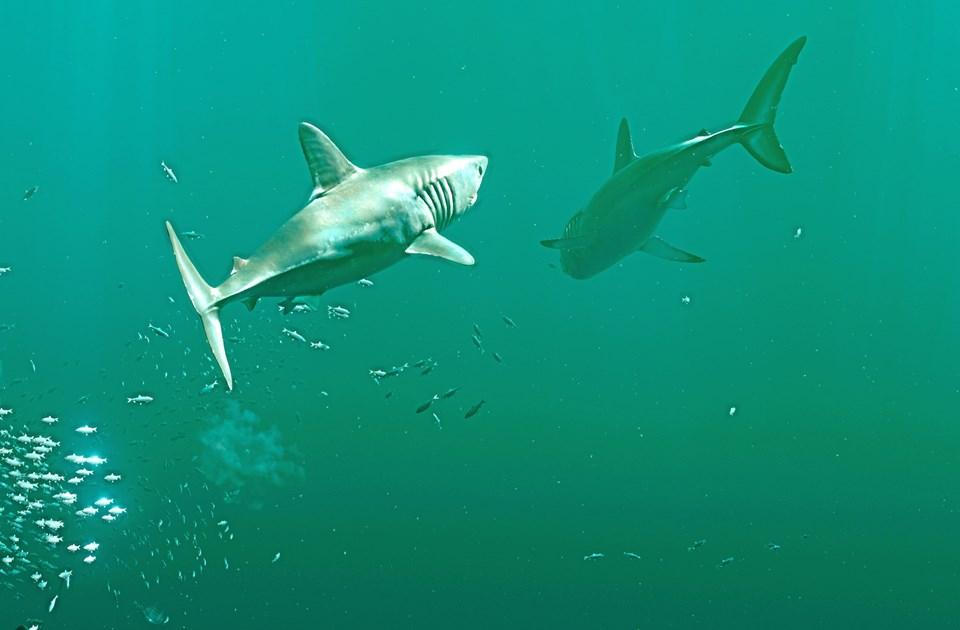 Indhold leveret af Nordsøen Oceanarium