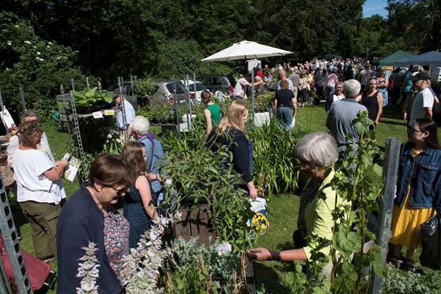 Haveselskabet er klar med sit årlige plantemarked i Østre Anlæg. Arkivfoto: Lars Horn