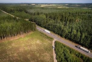 Nu kan du købe kæmpeskov - hvis du har råd