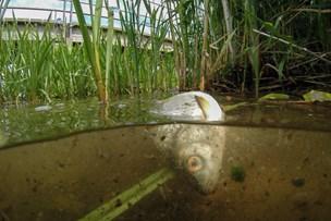 Giftstof, der dræbte fisk i sø, er nu sporet
