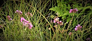 På jagt efter vilde blomster