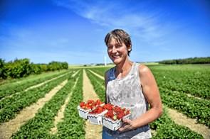 Sidste chance for Thy-jordbær