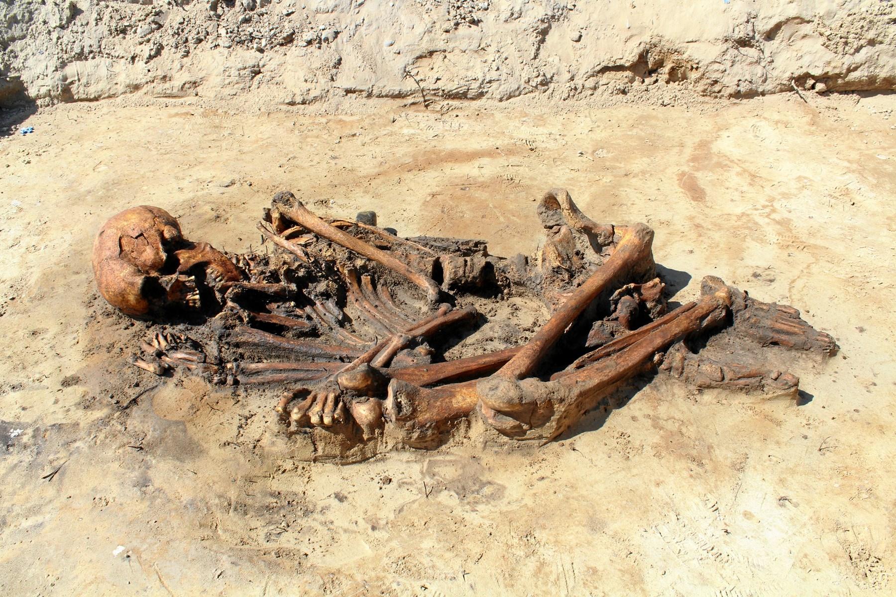 Det er et meget velbevaret skelet fra jernalderen, som arkæologer fra Nordjyllands Historiske Museum har fundet under en stor udgravning i det sydlige Aalborg. Skelettet er i øjeblikket udstillet i en formidlingscontainer ved udgravningen.  Foto: Nordjyllands Historiske Museum