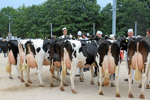 Miss-titel genindført på dyrskuet i Hobro