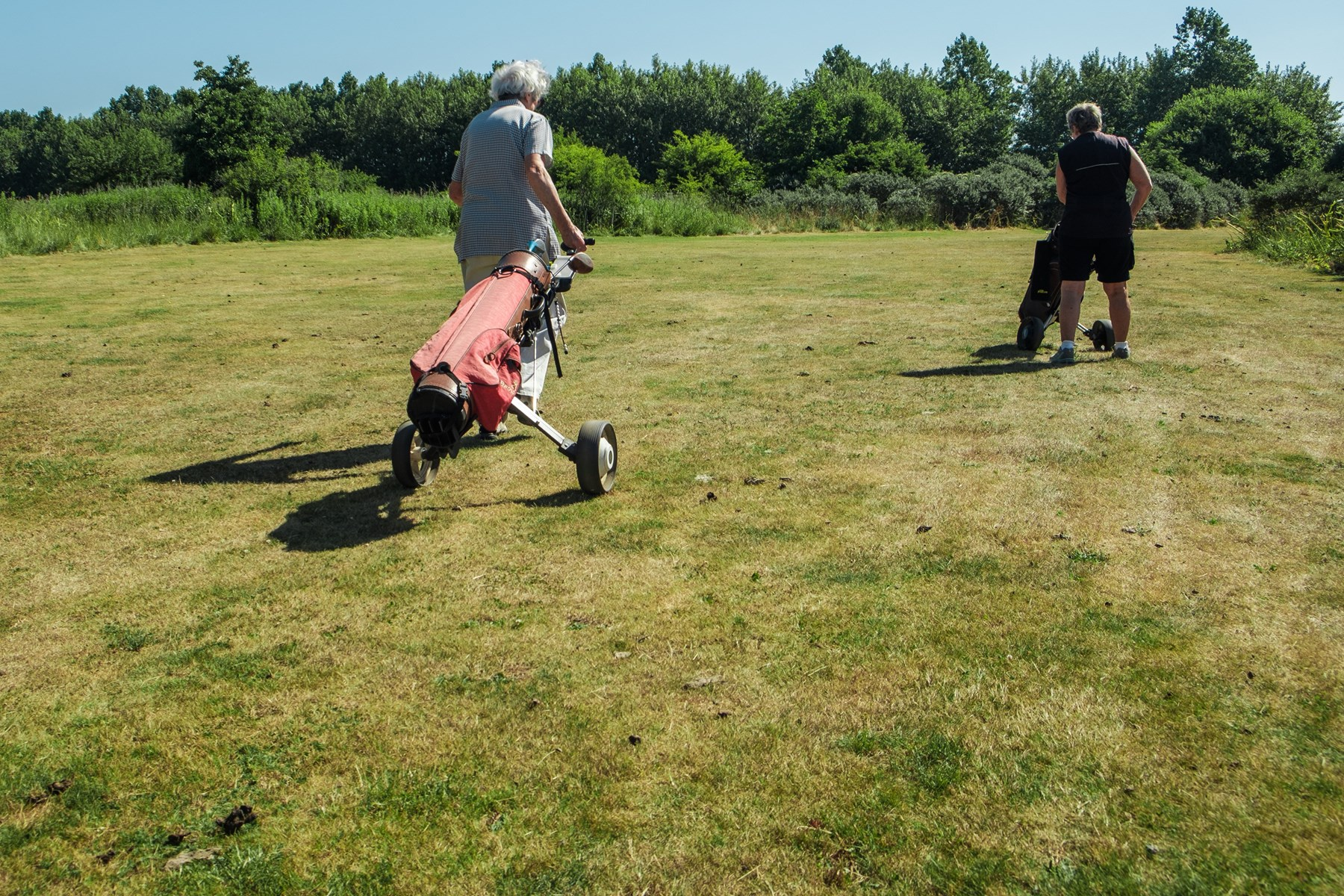 Det er direkte ubehageligt og ulækkert at færdes på golfbanerne i Lindholm, efter at den store fåreflok har holdt sit indtog på arealerne, for nu flyder det med fårelorte over alt. Foto: Lasse Sand