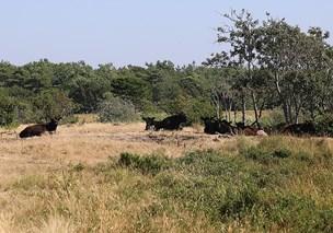 Sommervejret rammer landbruget