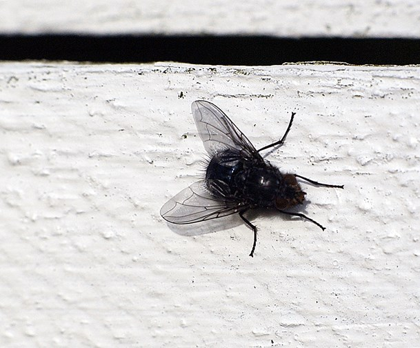 Stor fed spyflue årsag til udrykning