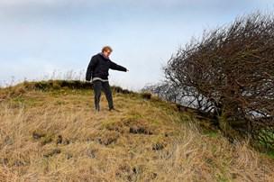 Retten skal afgøre, om det var fårene, der ødelagde gravhøj