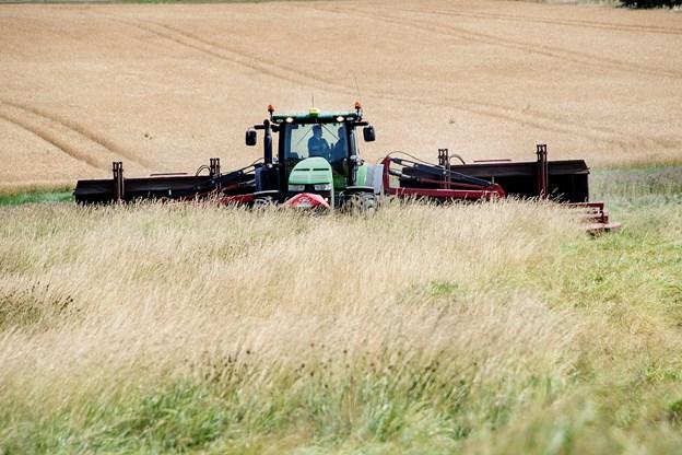 Lemper reglerne: Brakmark giver foder til kødkvæg