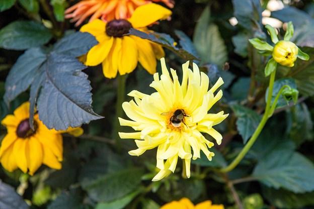 Sommerens farvetema er gul og orange. Foto: Henrik Bo