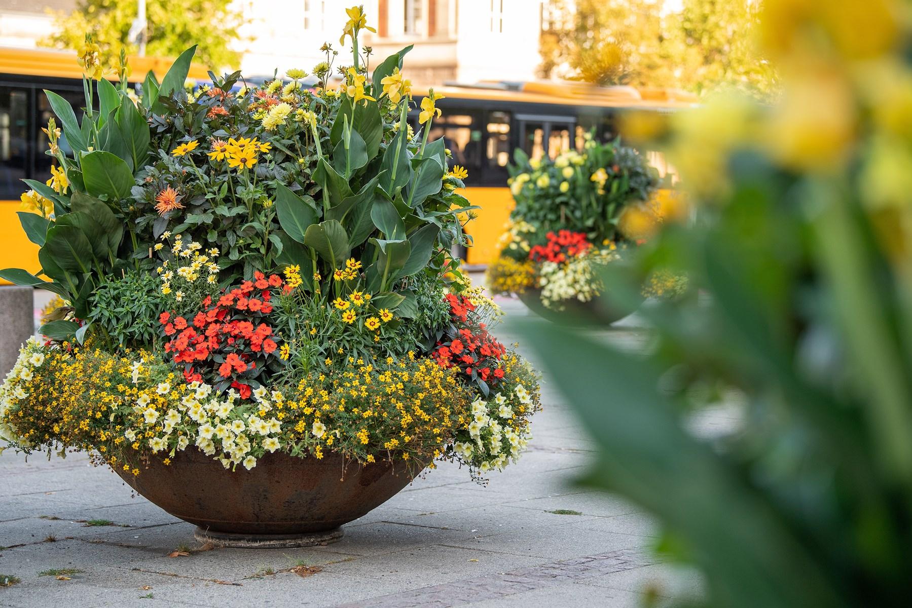 De flotte blomsterdekorationer, som vi alle kan glæde os over, kan nøjes med vand en gang om ugen. Foto: Henrik Bo