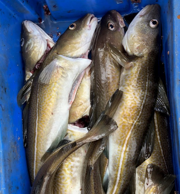 Et udsnit af den udsendtes dagens fangst…