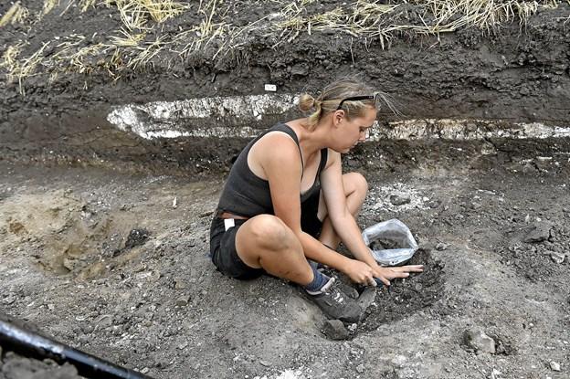 Arkæolog Kirstine Krath Nielsen er ved at tage jordprøver i et stolpehul. Der kan muligvis findes korn, som er nemme at tidsbestemme ved kulstofmetoden. I baggrunden ses det hvide kalklag, som har været gulv i et af husene. Foto: Ole Iversen