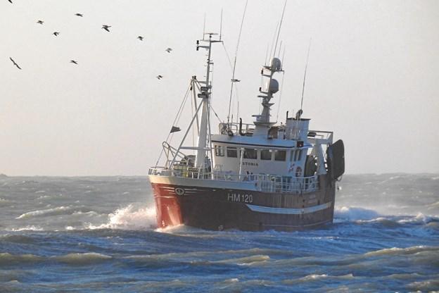 Det er Hanstholm Fiskeriforening, der står bag arrangementet. De har en række af deres fartøjer med, som holder åbent hus ombord.Foto: Aalborg Kommune