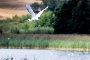 Sjældne fugle er vilde med lokal sø