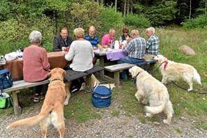 Skovens Hundevenner mødes dagligt