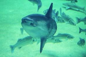 Fiskens Dag holdes i Oceanariet