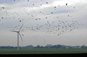 Fuglemassakre i vente: Storke og svaner snittes ihjel