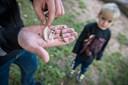 3-årige Philip forgiftet af træ i børnehave: Nu slår forældre alarm