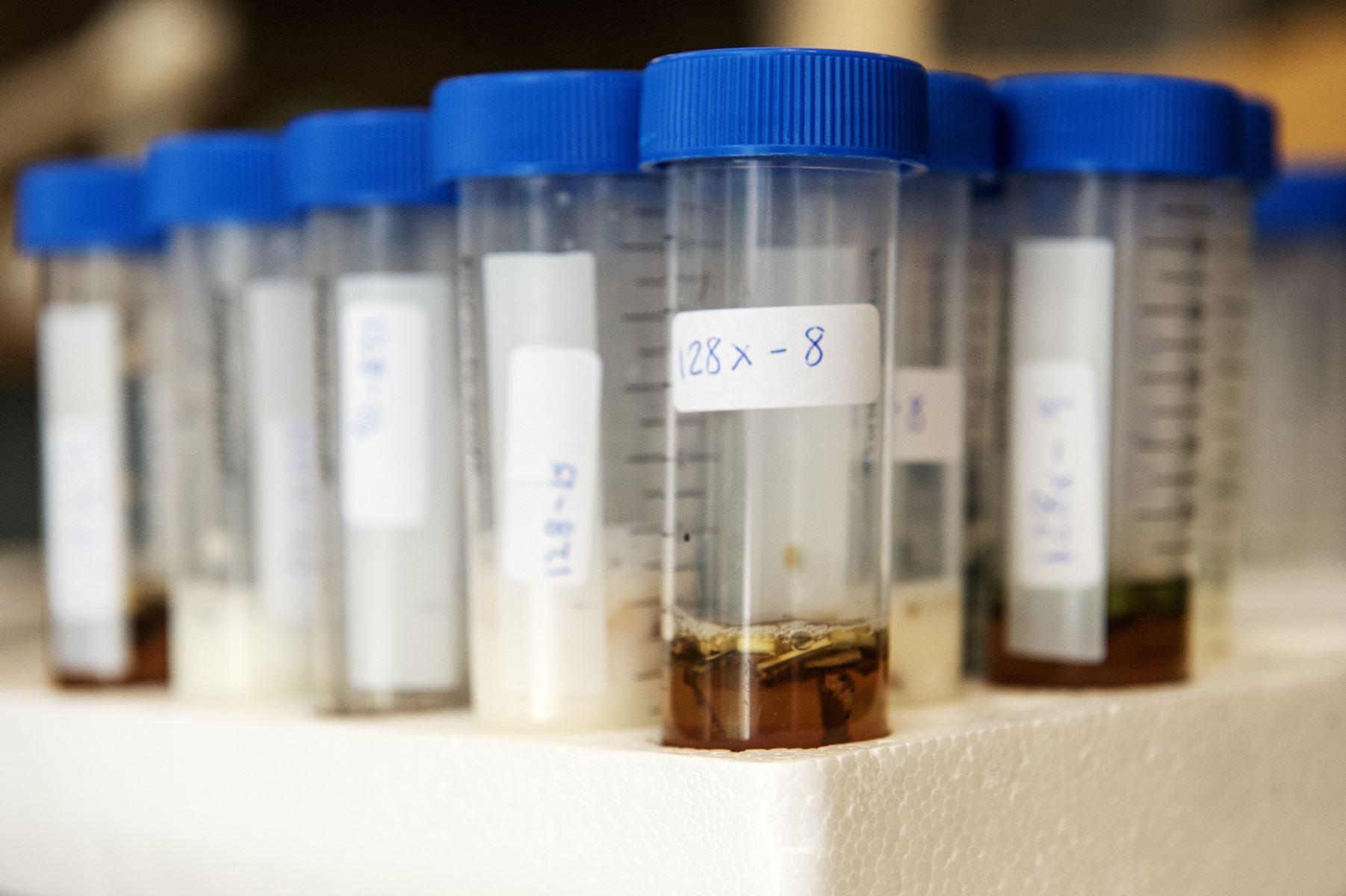 Årets Masseeksperiment sender tusinder af elever ud for at finde og analysere sunde bakterier i naturen.