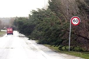 Nyt varsel: Vindstød af orkanstyrke i Nordjylland