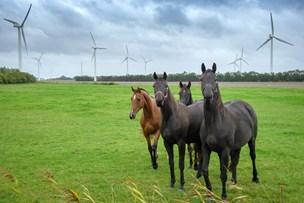 Efter indsigelser: Nu skrumper planlagt vindmøllepark