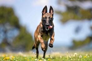 Hund fra Aabybro udvalgt til kalender