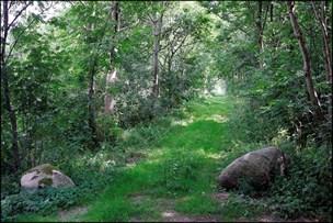 Aabybro-områdets drikkevand skal beskyttes: Her kommer nyt skovområde