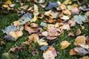 Kølige Danmark: Efterårsuge med byger og blæst