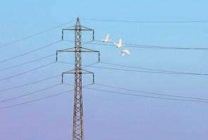 Vejlerne bliver mere sikker for fuglelivet