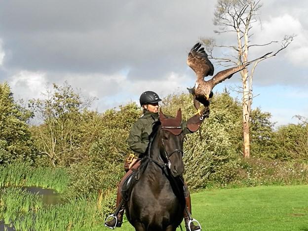 Opvisning med rytter hest og ørn.Privatfoto
